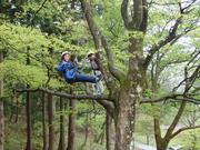木の上に乗る