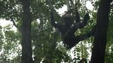 ロープを使った木登り