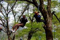 樹上の世界へようこそ