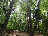 樹上の楽しみ