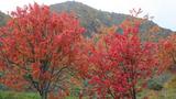 真っ赤な木々
