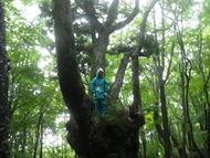 1日目:森のさんぽ