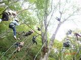 木に登る!木にぶら下がる!