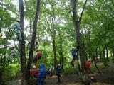 木々の上にて
