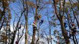 木の上の世界