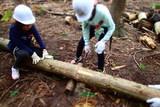 木を切る!