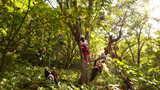 樹上の景色