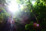 三つ滝と森