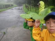 豪雨を体験、雨濡れハイクへ