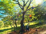 樹上の世界へ