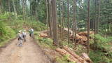 林業のエリア
