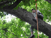 【午前④】木の枝に座る体験