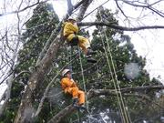 木の上でのひととき